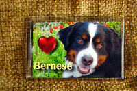 Bernese Mountain Dog Gift Fridge Magnet 77x51mm Birthday Gift Stocking Filler