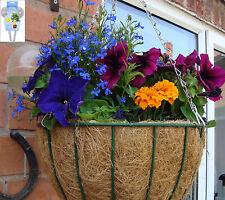 8 VASO SOSPESO Aqua Globes per un sistema irrigazione piante/vasi/vasche/piante + Mangimi