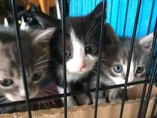 KITTEN FAMILY COLOR RESCUE PHOTO HELPS FEED PAY VETERINARY COSTS NON-PROFIT