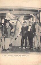 Fl - 1900's Rare! Florida Fishing Porpoise - Dolphin Biscayne Bay at Miami, Fla