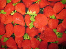 STRAWBERRY REALISTIC STRAWBERRIES FRUIT FOOD COTTON FABRIC FQ