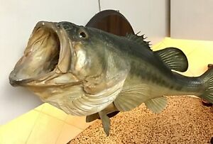 Large Mouth Bass Taxidermy Mount