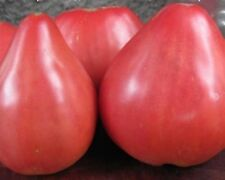 Pink Heart Tomato Seeds Batyanya Organically Grown Heirloom NON-GMO