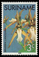"""SURINAME 429 (Mi712) - Orchid """"Brassia lanceana"""" (pa38334)"""