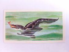 Brooke Bond Prehistoric Animals tea card 8. Mosasaurus. Dinosaurs.
