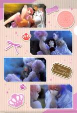 Wand of Fortune Clear File Folder Otometokuji V3 Prize E-2 Lulu Bilal Est Salo-m