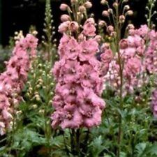 Delphinium / Larkspur- Pink Queen - 50 Seeds- BOGO 50% off SALE