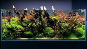 25 LIVE AQUARIUM FOR AQUATIC TROPICAL FISH TANK PLANTS LIVE COLDWATER BUNCHED
