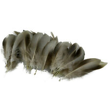 Wholesale 20//50//100pcs Beautiful en plumes d/'oie 4-6 in//10-15 cm Plus Couleur