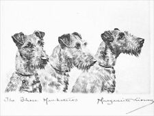 Irish Terrier Dogs 1925 Marguerite Kirmse 8 Large New Blank Note Cards