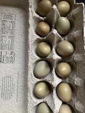 12+ Fertile Ringneck Pheasant Hatching Eggs