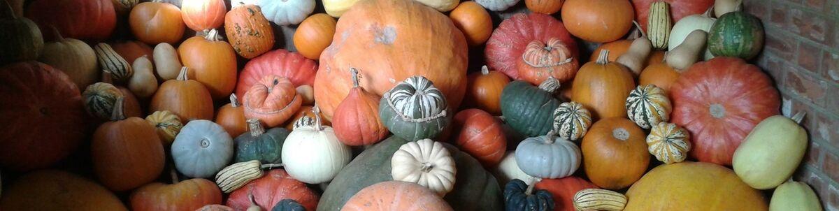 pumpkin_paradise