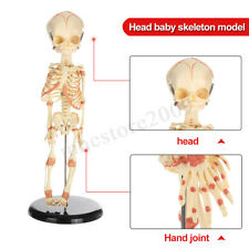 38cm Head Baby Skull Human Research Model Skeleton Anatomical Brain Anatomy