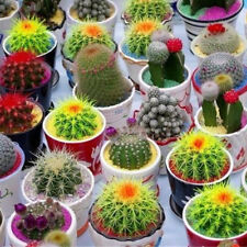 10Pcs/Bag Indoor Cactus Fresh Mix Seeds Cacti Bonsai Pot Plant Seed Garden Decor