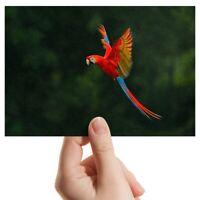 "Photograph 6x4"" - Macaw Bird Tropical Jungle Art 15x10cm #2770"