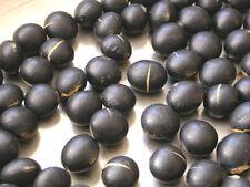 soybean, BLACK LAREDO, 115 SEEDS! GroCo#