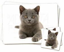 British Blue Kitten Cat Twin 2x Placemats+2x Coasters Set in Gift Box, AC-186PC