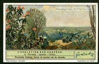 Cactus Peireskia Opuntia Cereus  Flower Blossom Plant Desert 1930s Trade Card