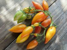 10 graines de tomate rare Sweet Cream heirloom tomato seeds méth.bio