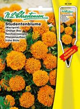 Studentenblume Orange Boy,Saatgut,Tagetes patula,Blume,Chrestensen,SE