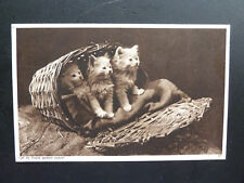 """Old Cat Postcard,Persian Kittens- """" Up to Their Games Again"""""""