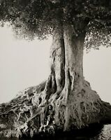 1993 Vintage HERB RITTS Giant Fig Tree Root Female Nude Africa Photo Art 16x20