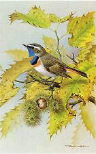 Bluethroat Bird Print Basil Ede Vintage 1980 Picture BEB#95