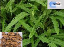 DR T&T 100g dry herb RHIZOMA DRYNARIAE Drynaria roosii gu sui bu