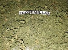 Artemisia Annua, Qing hao, ajenjo dulce, 15 gramos de hoja ecologica