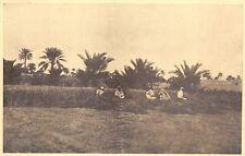 5423) LIBIA, CIRENAICA, OASI DI GIALO, LA MIETITURA DELL'ORZO.