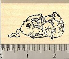 Abyssinian guinea pig facing worm rubber stamp E8517 Wm
