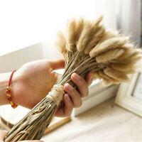 20* Natural Dried Small Pampas Grass Phragmites Communis,Wedding Flower Bunch H7