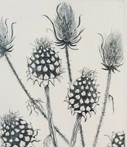 Signed Limited Edition Etching, Teasels & Artichokes / Thistles, Botanical
