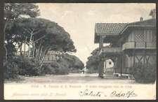Italy Postcard Pisa R Tenuta Di S Rossore Viale Maggiore 1900