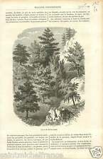 Landscape Trees Forest Canada Ontario Labrador GRAVURE ANTIQUE OLD PRINT 1886