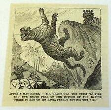 1885 magazine engraving~ After A Man-Eater, Tiger Shot & Falls Into Ravine