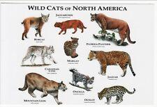 Art Postcard Wild Cats of North America Jaguarundi Bobcat Ocelot Margay More