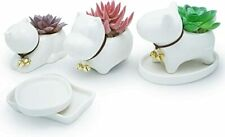 New listing Animal Succulent Planter Pots with Ceramic Saucer Tray 3 Inch White Small Plant
