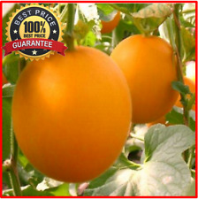 100++ Rare Fresh Earth Red Melon Seeds Sweet Organic Vegetable Fruit Seed!HOTHOT