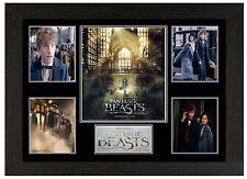 FANTASTIC BEASTS AND WHERE TO FIND THEM - A3 SIGNED FRAMED DISPLAY PICTURE