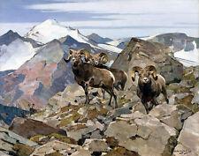 Rungius Carl Rocky Mountain Sheep Canvas 16 x 20  #5863