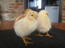 Anti Chick Slip Mat Chicks, Ducks Quails Chickens Hatching Brooder Incubator