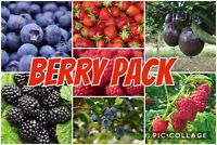 Organic Berry Pack ( Strawberry Blueberry Raspberry Blackberry Passionfruit)