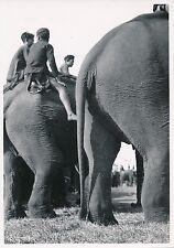 LAOS c. 1940 - Élephants Domestiques  Indochine  - P1029
