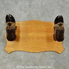 #16258 E+   Moose Leg Gun Rack Taxidermy Mount For Sale