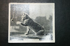 Cat Playing With Tassle     Original  1930's Vintage Photo Card  VGC