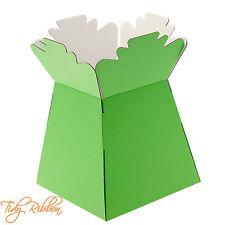 Lime Green Living Vase Bouquet Flower Box Gift Sweet Florist Presentation