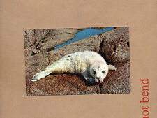 animalsof The Scilly isles baby seal on the western rock unposted 1980's  card a