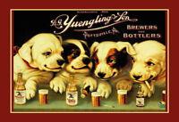 Yuengling & Son Ale And Bière Dogs Tôle Plaque Étain Signer 20 X 30 cm FA0842