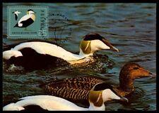 Poland Mk Birds Duck Wild Duck Eider Duck Canard Maximum Card Mc cm / m826